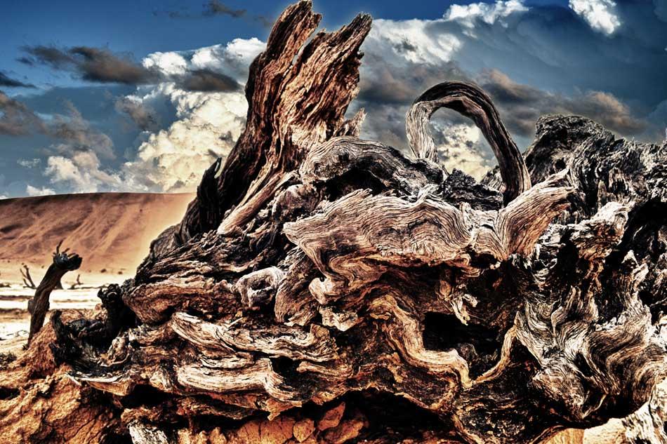 Dead forest - Sossosvlei